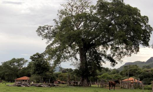 O prazo para produtores rurais registrarem suas propriedades no CAR foi prorrogado até dezembro de 2017 e vale para propriedades de qualquer tamanho
