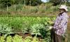 A caravana pretende divulgar o trabalho agroecológico do Tocantins