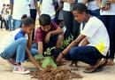 Estudantes realizam plantio de mudas de plantas nativas em Aurora