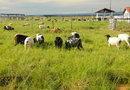 Marcos Cione abordará sobre o diagnóstico da oferta e demanda de ovinos e caprinos para o processamento da carne, pele e leite, na região central do Estado