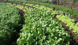 O Seminário vai mostrar as práticas agroecológicas que estão sendo desenvolvidas no Estado