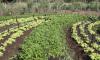 Durante o evento será ministrando pela Empresa Brasileira de Pesquisa Agropecuária (Embrapa) um curso sobre Produção Orgânica de Hortaliças