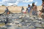 Agricultura participa de intercâmbio sobre criação de peixes nativos em viveiros