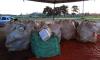 Ao todo, o projeto já alcançou cerca de 120 pequenos produtores rurais que devolveram 1.241 embalagens vazias de agrotóxicos