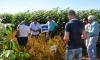Embrapa apresentou três variedades de arroz: Esmeralda, Serra Dourada e Sertaneja, que são tolerantes a herbicidas e adaptadas ao solo tocantinense