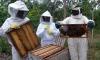 Objetivo do curso é incentivar a produção de mel de forma sustentável na região