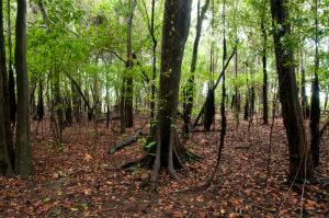 Parque Estadual do Cantão completa 19 anos