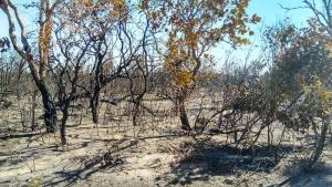 Área de Reserva Legal foi atingida pelo incêndio