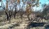 O fogo atingiu uma área de reserva legal da Fazenda Boa Esperança, onde devastou 31,20 hectares do Cerrado