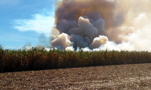 O incêndio começou em um canavial da empresa Ramata Empreendimentos e Participações S.A, destruindo uma área de 118,98 hectares do canavial, antes de se espalhar para uma área de reserva