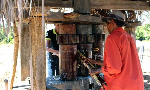 Como parte da festa, o visitante poderá conhecer como é feito o processo de moagem da cana de açúcar em engenho de madeira
