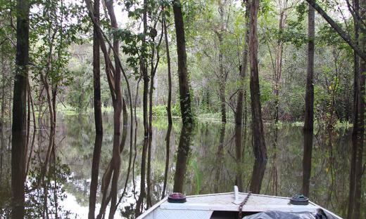 De dezembro a maio, período das cheias na região, a floresta fica inundada e os rios sobem em média 10 metros, com as embarcações navegando no topo das árvores