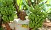 No Tocantins, 6.250 produtores estão cadastrados no Programa Aquisição de Alimentos