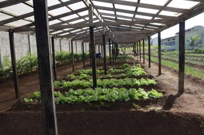 A agricultura é um diferencial nas unidades socioeducativas do Estado.