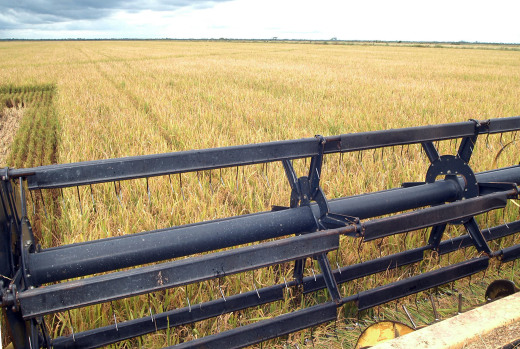 Será feito o estudo de seis cadeias produtivas: da soja, do milho, da pecuária, do arroz, da silvicultura e da piscicultura