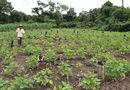 A melancia e o feijão caupi estão entre os principais produtos dos agricultores familiares à venda nos programas PAA e PNAE no Tocantins