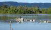 Governo vai liberar linhas de crédito apropriadas para os piscicultores desenvolverem suas atividades
