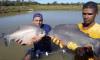 O censo tem como objetivos mapear, identificar, classificar e caracterizar, a produção de peixe em cativeiro no Tocantins