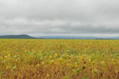 lançamento da colheita de soja fotos Manoel Junior (75).JPG