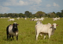 O Simpósio tem como objetivo promover o crescimento técnico dos profissionais da área de produção e reprodução bovina no Tocantins