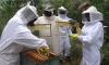 Os indígenas da Ilha do Bananal conhecerão as formas de manejo para a criação de abelhas e a produção do mel