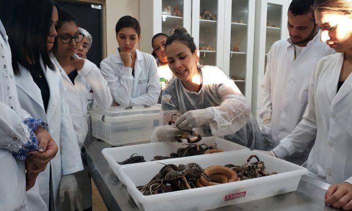 Faculdades de Medicina Veterinária recebem especialistas da Supervisão de Fauna Naturatins_Foto Grasiela Pacheco - Gov Tocantins (11)_700x420.jpg