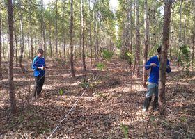 O estudo visa realizar o levantamento dendométrico das florestas plantadas, outra tarefa é para traçar o perfil dos silvicultores das regiões estudadas