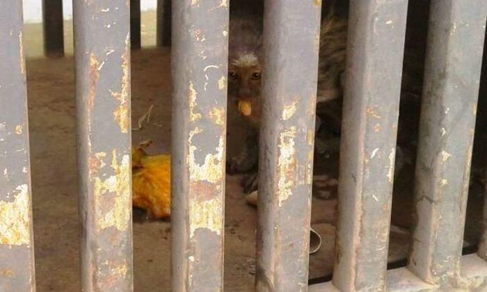 Animal capturado pelo BPMA_700x420.jpg