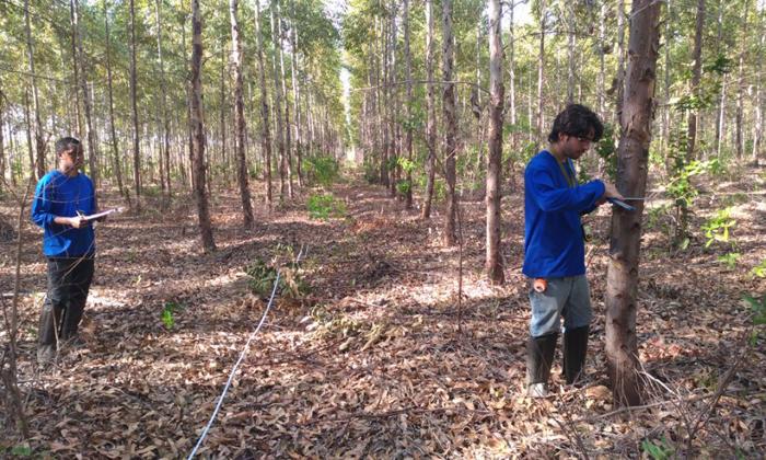 O estudo visa realizar o levantamento dendrométrico das florestas plantadas e traçar o perfil dos silvicultores das regiões estudadas