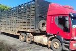 Caminhão apreendido com gado em Palmeirópolis