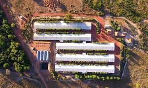 """Fazenda Pedra Furada, no município de Palmeiras do Tocantins, foi a pioneira no país em tratamento de dejetos de aves, popularmente conhecido como """"cama de frango"""", em biodigestores"""