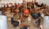 Abatedouro de frango caipira vai impulsionar a agricultura familiar e foi implementado a partir da assistência técnica e extensão rural prestada pelo Ruraltins