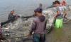 A meta é identificar cerca de três mil pisciculturas ou potenciais pisciculturas