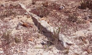 monumento natural das arvores fossilizadasdo tocantins - foto carlos magno - secom (4).JPG