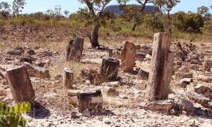 monumento natural das arvores fossilizadasdo tocantins - foto carlos magno - secom (10).JPG
