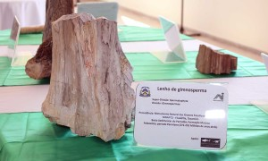 monumento natural das arvores fossilizadasdo tocantins - foto carlos magno - secom (13).JPG