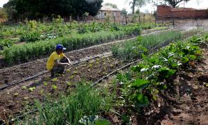 No sudeste, agricultores estão garantindo a segurança alimentar, a comercialização e até o surgimento de novos postos de trabalho