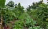 Um grupo formado por 30 agricultores da Comunidade Córrego Matinha, em Araguaçu, recebe o curso de olericultura agroecológica
