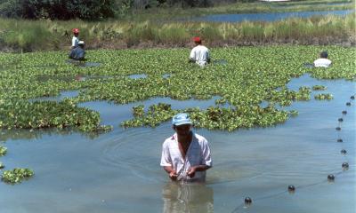 No diagnóstico, são colhidas informações sobre as principais espécies, tempo de pesca, práticas utilizadas, comercialização, atividades que realizam além da pesca, acesso a financiamentos, dentre outras questões