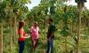 O levantamento buscou dados capazes de determinar a satisfação do agricultor beneficiado pela Assistência Técnica e Extensão Rural (Ater)
