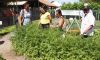 Tecnologias apropriadas à produção agrícola serão apresentadas a produtores de Marianópolis