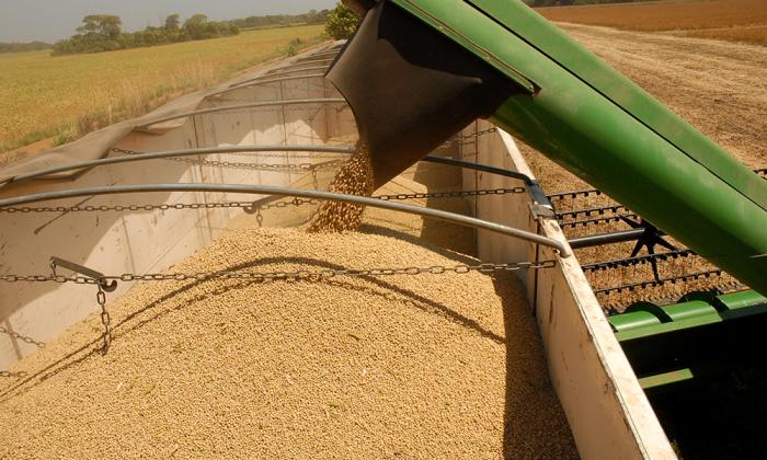 De acordo com o 1º levantamento de estimativa de produção de grãos da Conab, divulgado em outubro de 2017, a produção de grãos na safra 2017/2018, no Tocantins, será de 4.446,6 milhões de toneladas
