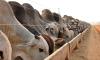 Um dos temas abordados no evento será a alimentação alternativa para bovinos na seca
