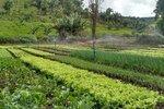 O CMDRS é o espaço principal para a discussão de propostas que atendam às demandas dos agricultores familiares e para a elaboração de políticas públicas