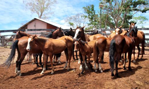 Em 2016, o Tocantins registrou 16 novos casos de Mormo, já neste ano, até o momento, foram somente sete registros