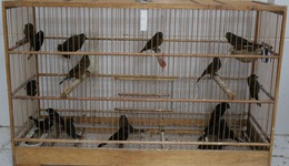 Mais 300 aves serão repatriadas no Tocantins_Foto Letícia Maria Pereira-Ong Mata Ciliar (1)_260x150.jpg