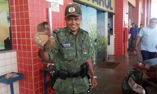Em Palmas, a Polícia Ambiental realizou a captura de um macaco Sagui que entrou no escritório de um posto de combustíveis