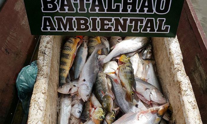 Pescados apreendidos pelo Bpma.jpeg