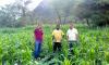 O agricultor Alvaci Batista da Cruz com assistência técnica do Ruraltins espera colher três toneladas de milho