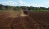 Na vitrine de dois hectares os técnicos da Seagro plantaram cerca de 30 variedades de mandioca, sendo que a maioria já é adaptada ao solo e clima tocantinense